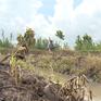 ĐBSCL: Nhiều vụ phá hoại vườn cây do mâu thuẫn