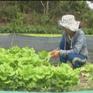 Quảng Nam triển khai chuỗi thực phẩm an toàn