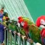 Khu vườn nhiều chim nhất thế giới