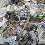 Đông Nam Á đứng trước nguy cơ rác thải tăng vọt