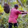 Malaysia phát động chiến dịch yêu mến dầu cọ