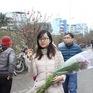Hà Nội tổ chức 64 chợ hoa xuân dịp Tết Nguyên đán Kỷ Hợi