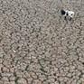Hồ nước nghìn năm tuổi hóa hoang mạc ở Chile