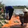 Đồng Tháp: Kiệu Tết ế hàng, nông dân chuyển sang bán lẻ