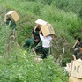 Đề nghị xác minh xử lý trách nhiệm để xảy ra buôn lậu tại Lạng Sơn