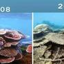 """Đưa thiên nhiên vào trào lưu """"thử thách 10 năm"""": Những thay đổi đáng buồn"""