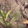 """Bắc Ninh: Gần 150 gốc đào bị chặt phá, nhiều hộ dân """"chết đứng"""""""
