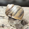 Thanh niên Pháp khởi nghiệp thành công với nghề nuôi ốc sên