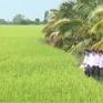 Bộ NN&PTNT kiểm tra sản xuất lúa Đông Xuân tại ĐBSCL