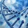 Trung Quốc xác nhận phụ nữ thứ hai mang thai có chỉnh sửa gen