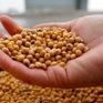 Trung Quốc bắt đầu mua nông sản của Mỹ