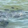 Brazil dọn dẹp bãi biển và điều tra sự cố tràn dầu