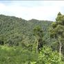 Quảng Nam hoàn thành trồng hơn 2.000 ha rừng thay thế