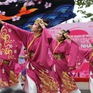 Đón chờ lễ hội hoa anh đào Nhật Bản 2020
