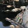 Ô nhiễm kênh Bắc Hưng Hải ảnh hưởng đến cuộc sống của hàng nghìn hộ dân