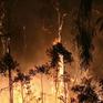 Australia ban bố tình trạng khẩn cấp do cháy rừng