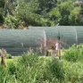 Ngang nhiên công khai rao bán đất rừng ở Lâm Đồng