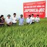 Lúa chất lượng có giá bán cao