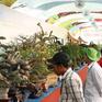 50 quốc gia tham gia Lễ hội Bonsai và Suiseki châu Á - Thái Bình Dương
