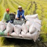 """Nghịch lý gạo Việt: Ngon nhất thế giới nhưng bán với """"giá bèo"""""""