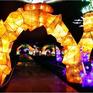 Rực rỡ sắc màu lễ hội ánh sáng nâng cao nhận thức bảo vệ biển