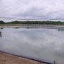 Bạc Liêu tăng cường bảo vệ môi trường nuôi tôm