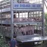 Long An tiêu hủy hàng trăm con lợn nhập lậu