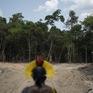 Báo động nạn phá rừng Amazon ở Brazil