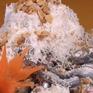 Gỏi cá trích - Đậm đà hương vị biển Phú Quốc