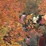 Du lịch ngắm lá vàng, lá đỏ cuối thu ở Trung Quốc hấp dẫn du khách