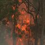 Nguy cơ ô nhiễm nguồn nước do tàn tro cháy rừng ở Australia