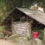 Nông dân Sapa chủ động phòng chống rét cho gia súc