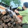 Khánh Hòa: Ngăn chặn đường dây gỗ lậu cuối năm
