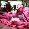 """Trung Quốc: Khủng hoảng thịt lợn khiến tài sản của nhiều """"đại gia"""" tăng vọt"""
