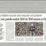 Hàng nghìn nông dân châu Âu bỏ trồng củ cải đường