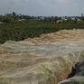 Mô hình phủ lưới, phòng trừ sâu đục trái trên vườn mận Thới Long