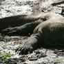Indonesia bán vé trực tuyến đến Công viên quốc gia Komodo
