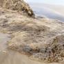 Làm rõ nguyên nhân nước biển Quảng Ngãi chuyển màu