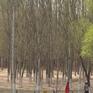 Vành đai xanh đô thị giúp Trung Quốc bớt ô nhiễm