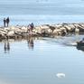 Nước biển Đà Nẵng bốc mùi hôi bất thường