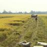 Đồng Tháp kiến nghị tạm trữ lúa Đông Xuân
