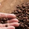 Thái Lan nhập 92% lượng cà phê từ Việt Nam