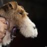 Hàn Quốc nỗ lực xóa sổ ngành công nghiệp thịt chó