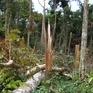 Gia Lai: 3 đối tượng chặt phá hơn 1,2ha rừng phòng hộ