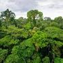 Chống khai thác mỏ trái phép tại rừng Amazon