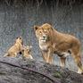 Các loài động vật lớn nhất có nguy cơ bị tuyệt chủng