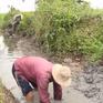 Hạn mặn xâm nhập sớm uy hiếp ở ĐBSCL