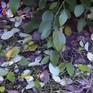 Nhức nhối nạn hủy hoại cây trồng ở Cư M'gar, Đắk Lắk