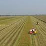 Giá lúa một số khu vực ở ĐBSCL tăng nhẹ