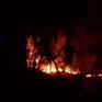 Cháy rừng tại Đồng Nai